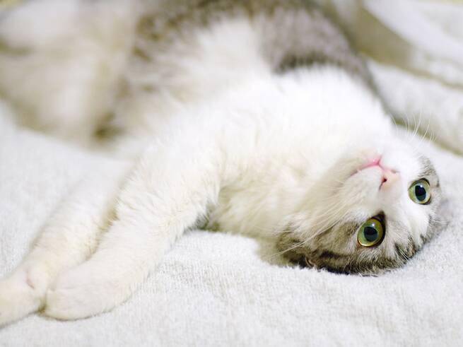 kittens18
