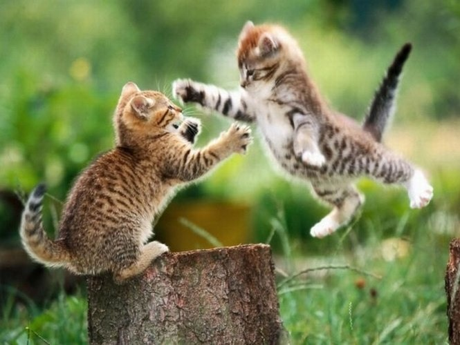 kittens19