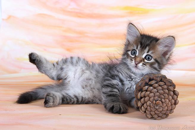 kittens20