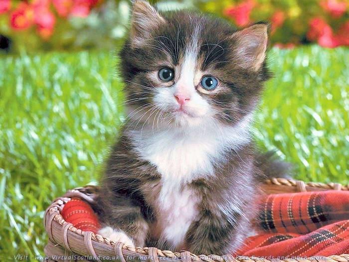 kittens21