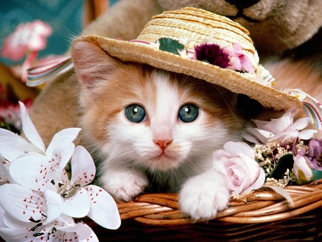 kittens22