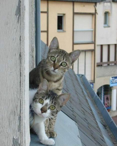 funny-cats16