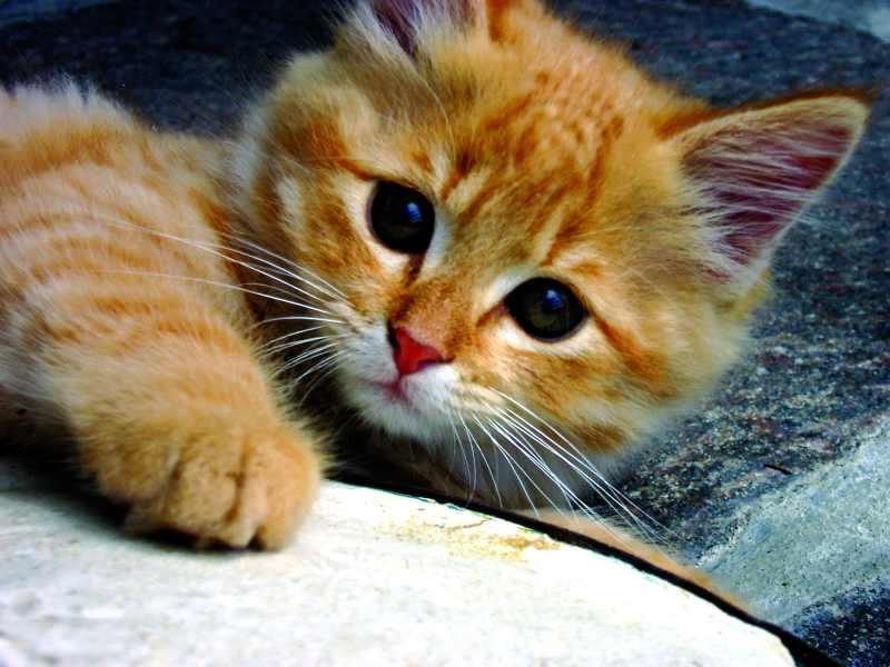 kittens24