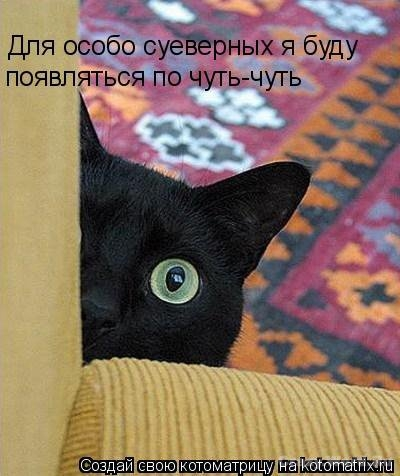funny-cats18