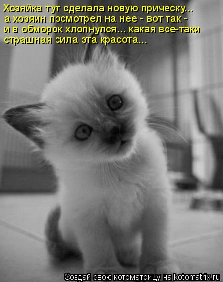 funny-cats22