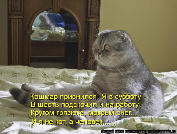 funny-cats25