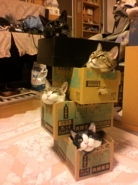 кот-коробка-коммуналка-ужас-шредингера-787008