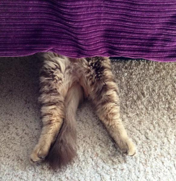 Ноги и хвост