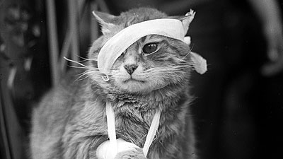Injured_kitty