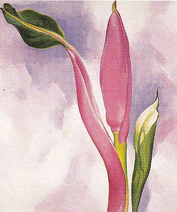 Georgia-O_Keeffe-Pink-Ornamental-Banana-1939-large-1340334874