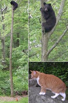 Толстый кот загнал медведя на дерево (а может тот наоборот он слезает?)