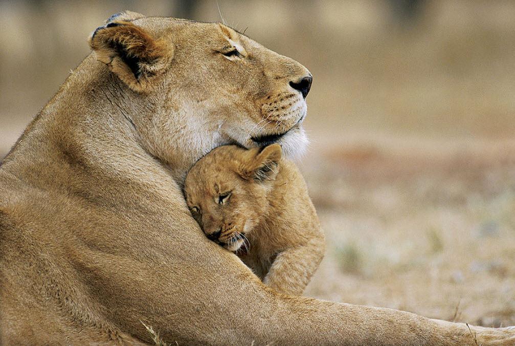 Материнство в природе
