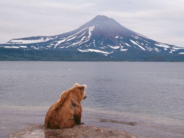 Идея изнасиловать медведя, как квинтэссенция духовности