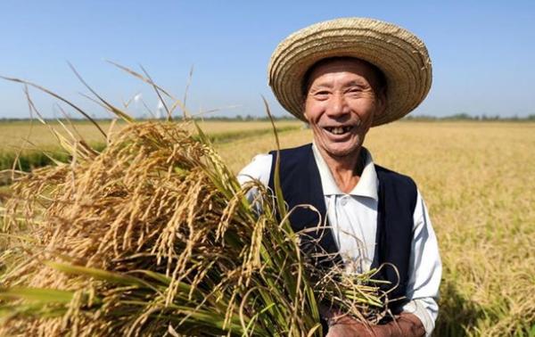 Китай не устраивает российское зерно, зато Киеву — преференции