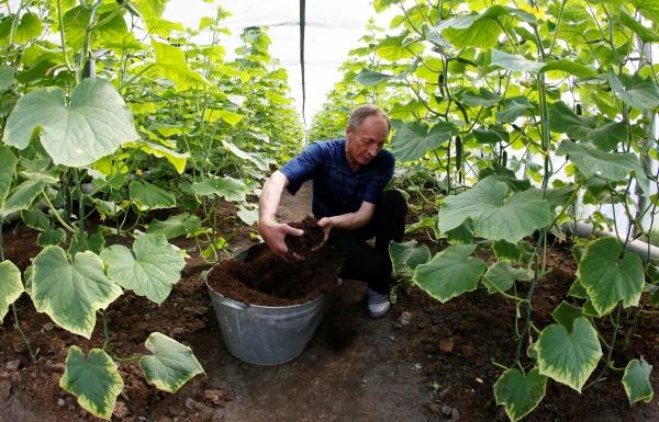 Огороды играют важную роль в жизни граждан России