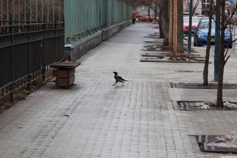 20200129_19-11-Чиновники против семьи- активистам не дают проводить пикеты в Москве-pic7