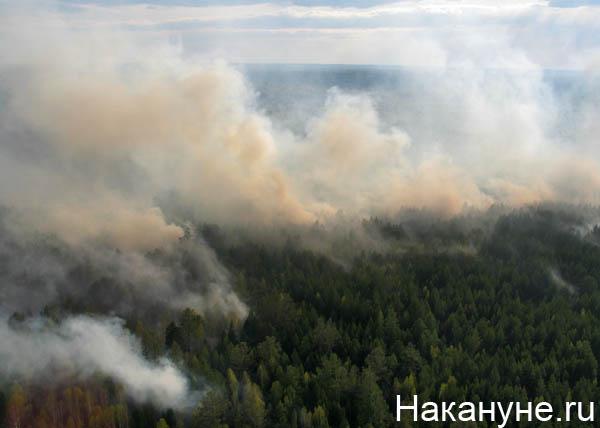 20190802_10-02-Площадь лесных пожаров в труднодоступных местах Сибири растет