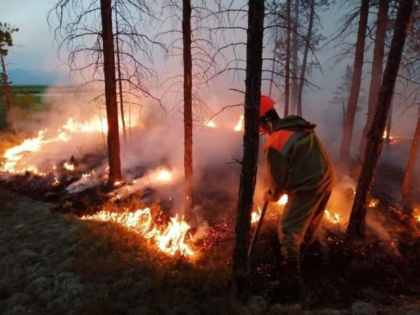 20190801_14-05-Почему число пожаров падает, а их площадь растет-pic1