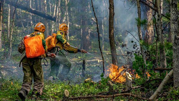 20190805_13-48-Генпрокуратура выявила искажение статистики по лесным пожарам
