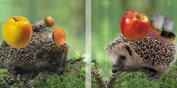 картинки ежик с яблоками