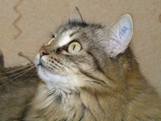 Номерная кошка