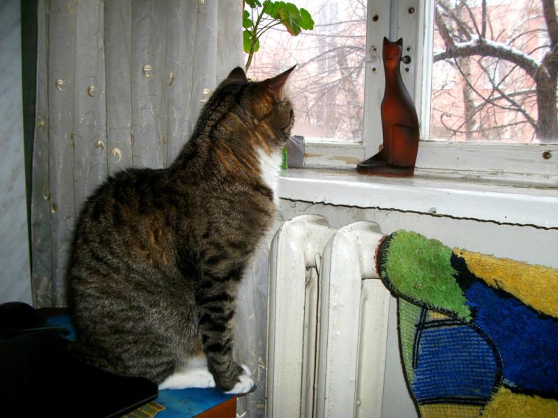 Взгляд у окна (2)