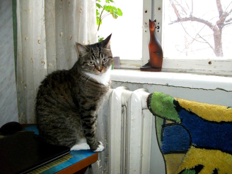 Взгляд у окна (1)