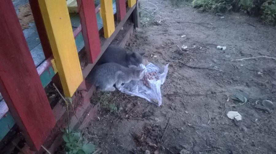 Котята (2)