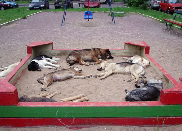 доворовые собаки