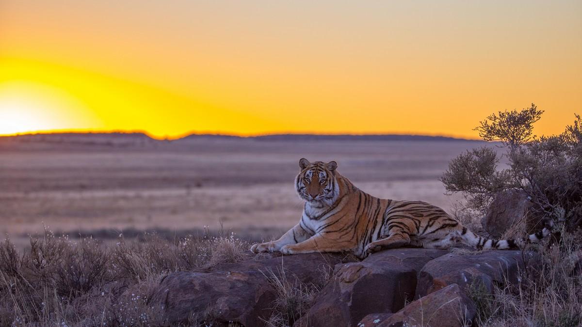 желании можно картинки пустыня и тигр меня был
