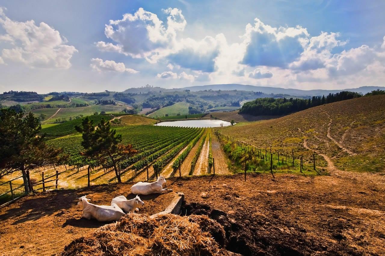 исключено, что плантации в италии фото уже