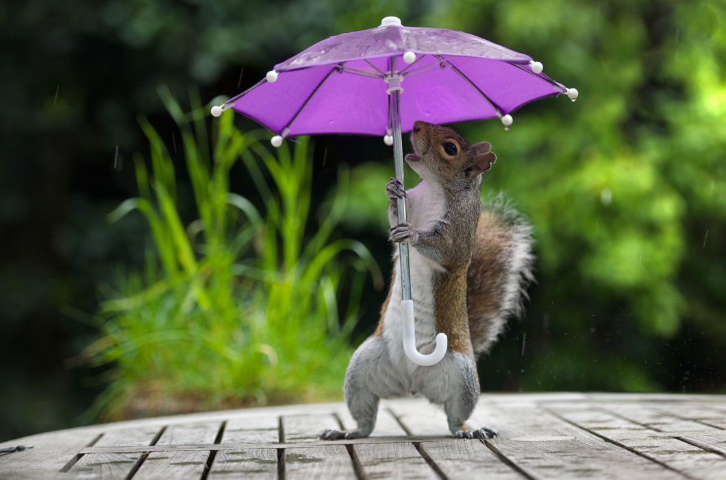 Прикольная картинка про дождик