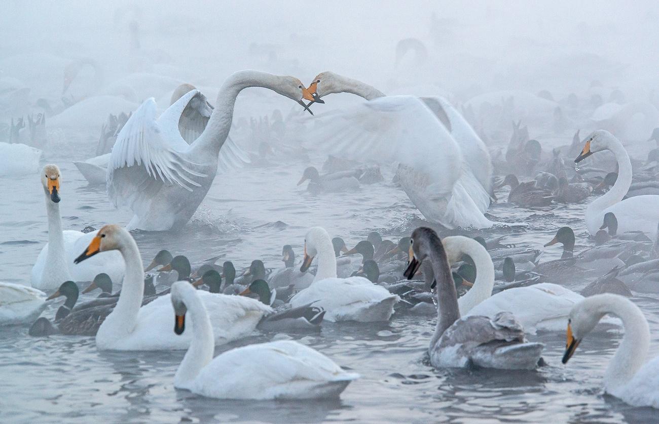 Алтайский край картинки с района советского на озере где лебеди, открытки днем рождения