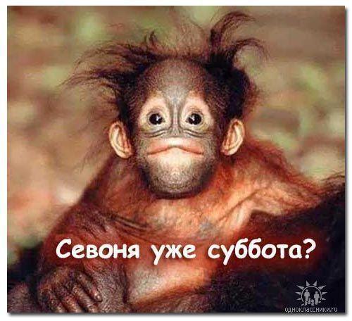 -обезьяна