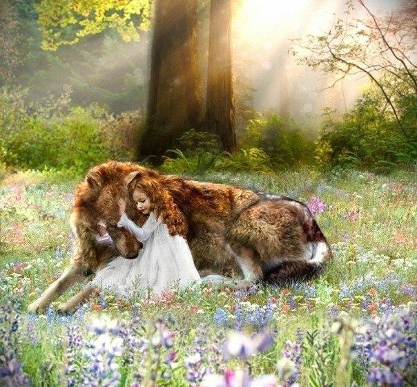 д и волк