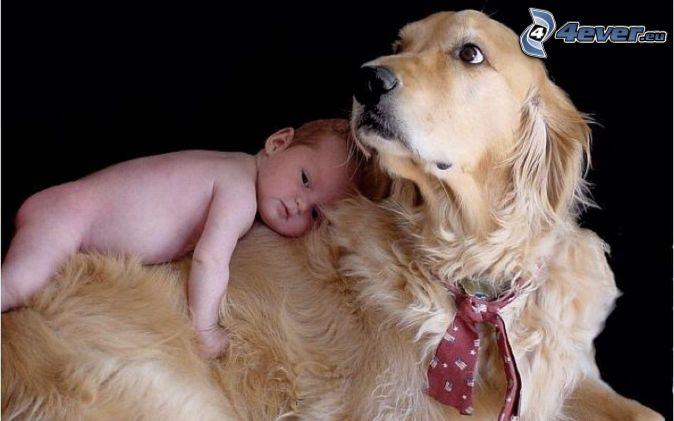 пес и дети