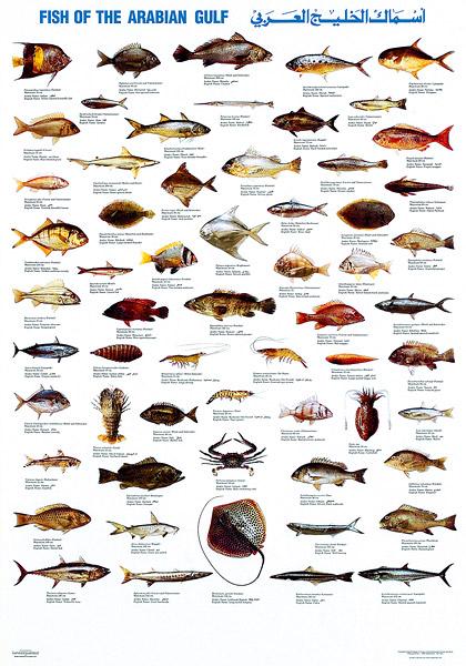 Как будет Рыбалка по-английски
