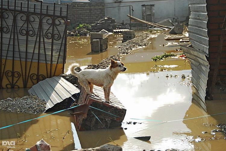 Крымск наводнение 27