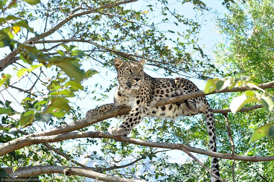Крупнейший частный зоопарк СНГ вновь открыт!