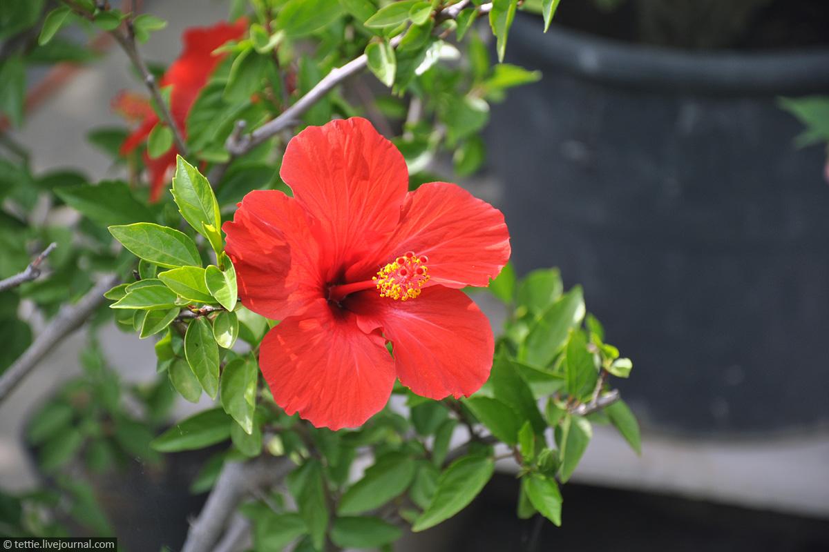 Крымский цветок