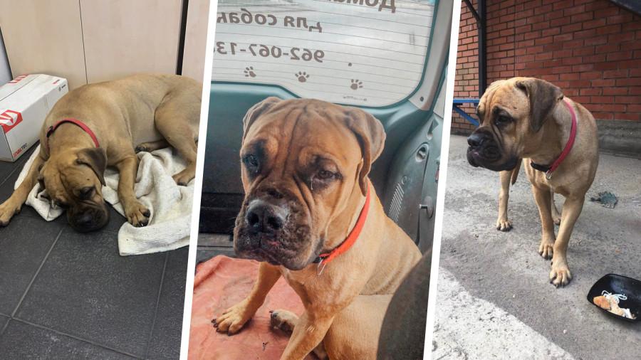 Собака два дня возвращалась домой по тайге