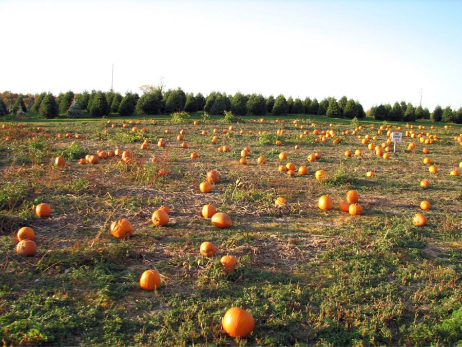 10202007-pumpkinpatch
