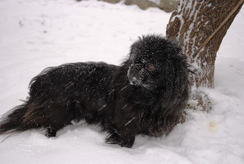 Нюня в снегу