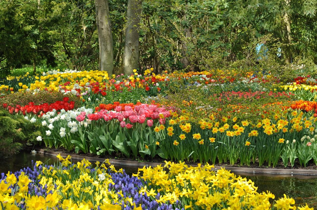 Картинки река из цветов
