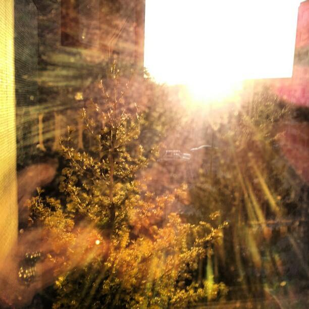 sunburstpine