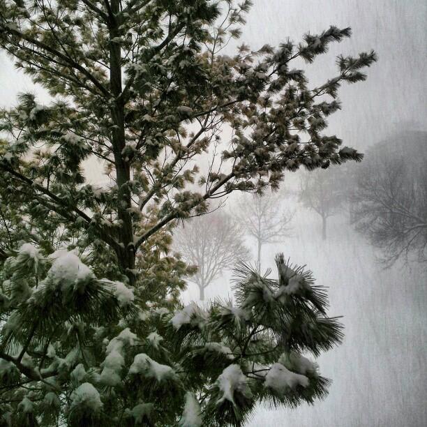 blizzardpinesFeb21