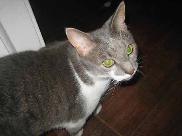 Сонник приснился домашний кот