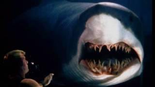 shark12