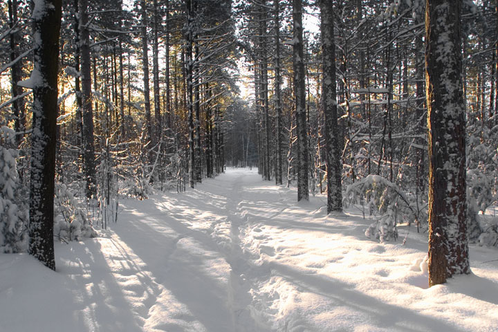snowy_forest