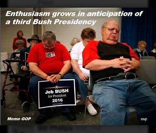 3rd bush.jpeg